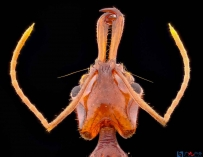小蚂蚁---大特写